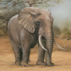 elephant (pastel & akwarel)  500 x 600mm